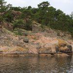 der Felsabhang einer Schäre mit rosa Quarzgestein, auf dem gelbe und hellgrüne Flechten und in den Felsspalten kleine Kiefern wachsen